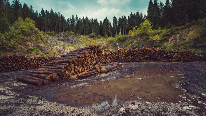 Pros/Advantages and Cons/Disadvantages of Deforestation